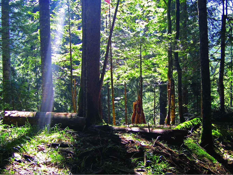 perućica prašuma